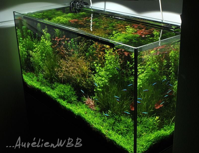 gazon artificiel aquarium