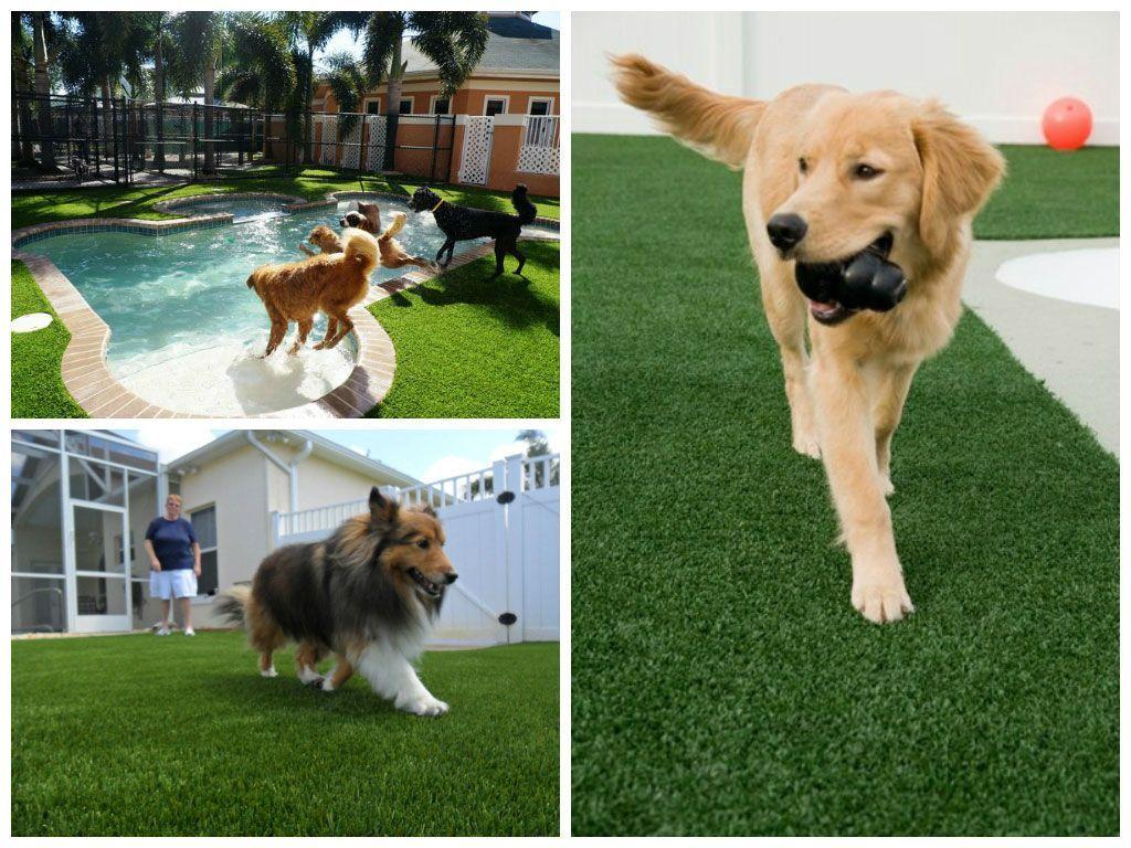 gazon artificiel chien