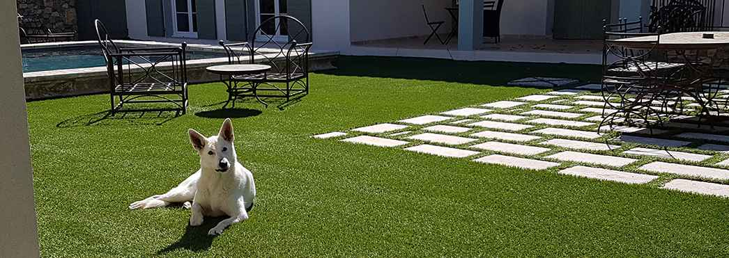 pelouse artificielle chien