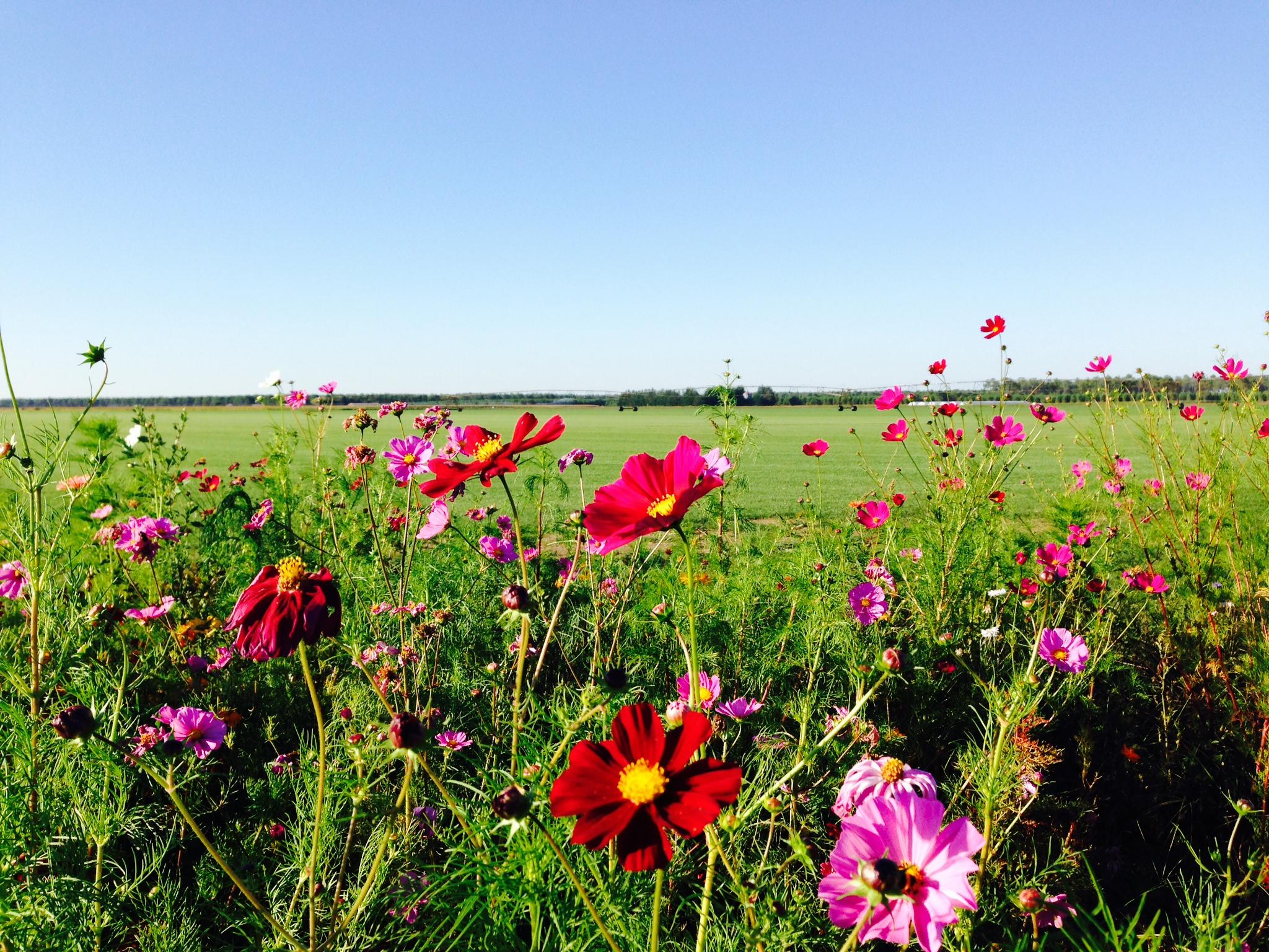 pelouse synthetique avec fleurs