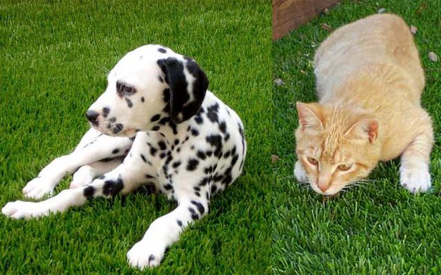 pelouse synthetique avec un chien